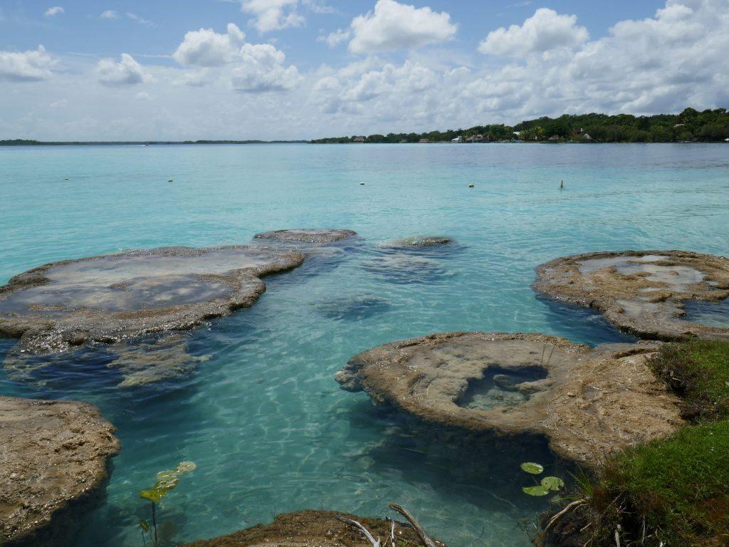 Bacalar stromatolites 1024x768 Bacalar et la lagune aux 7 couleurs