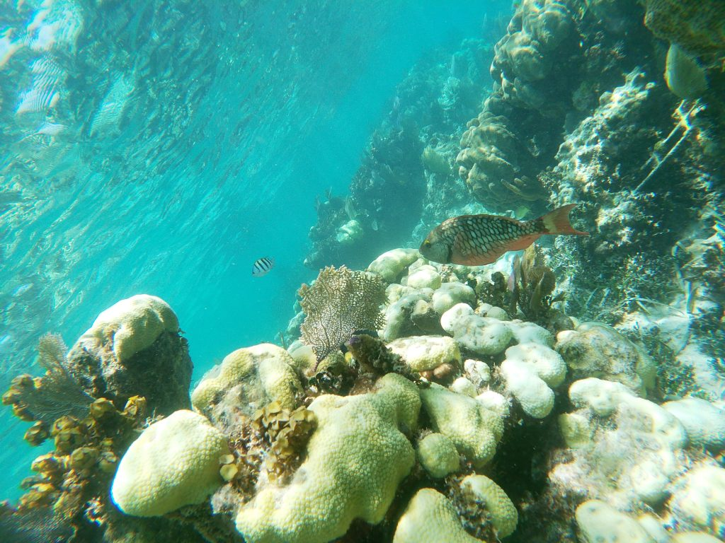 Caye Caulker en famille snorkeling2 1024x768 Le paradis a un nom : Caye Caulker