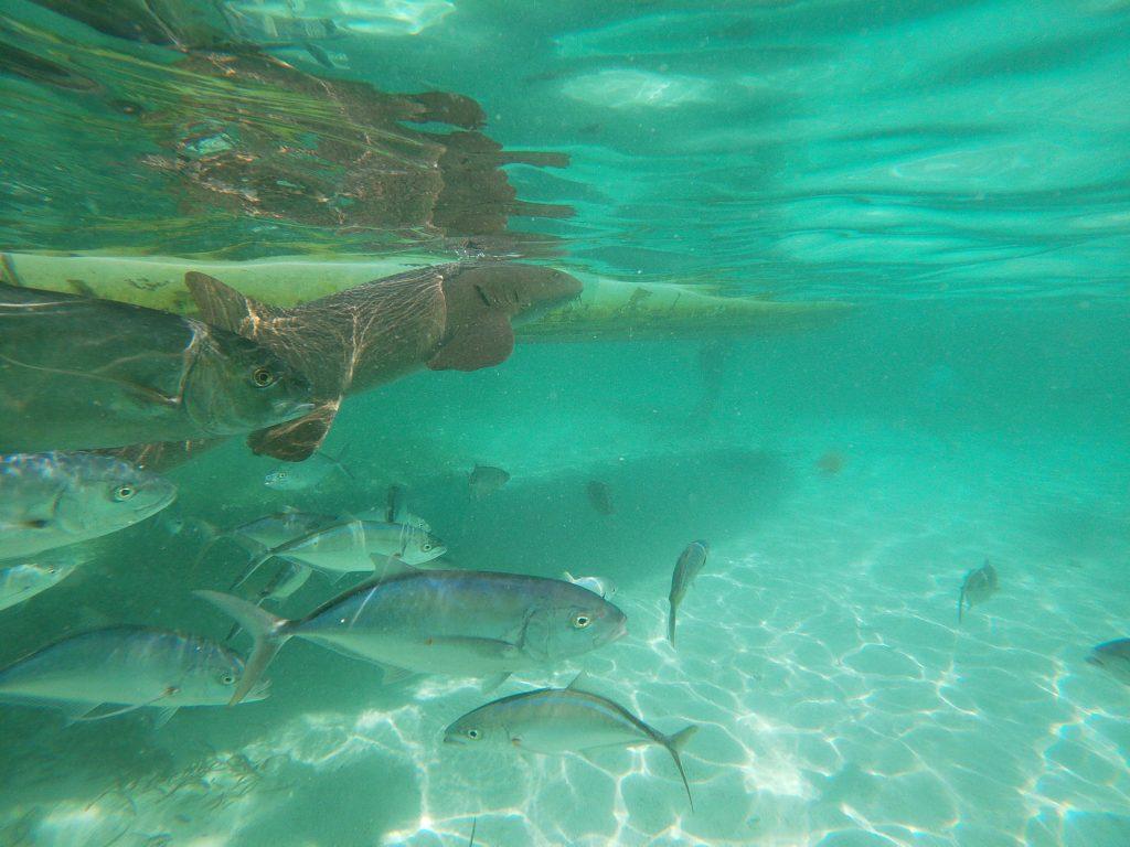 Caye Caulker en famille snorkeling3 1024x768 Le paradis a un nom : Caye Caulker