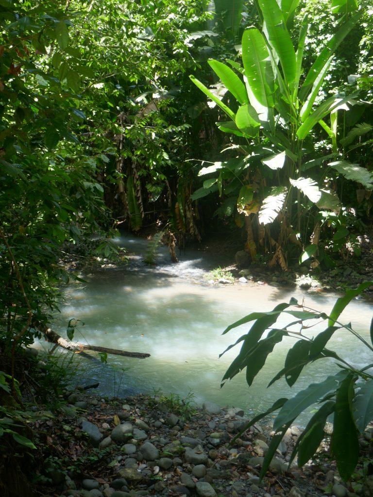 parc manuel antonio e1570071578983 768x1024 Costa Rica : A la découverte des animaux sauvages