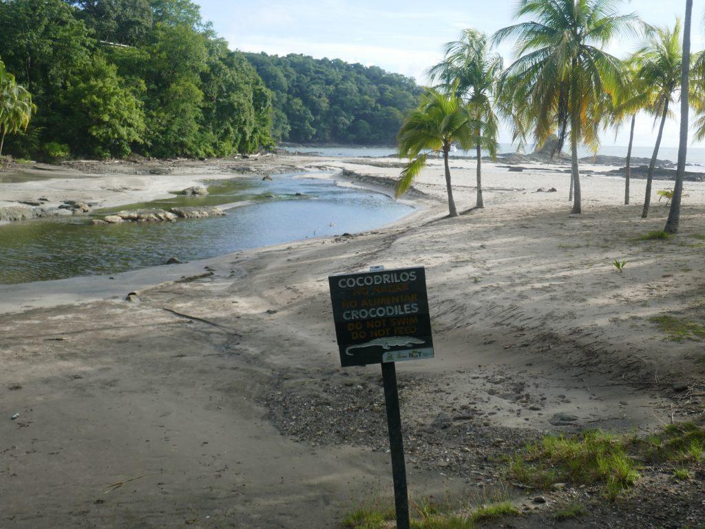 puerto carillo 1024x768 Costa Rica : A la découverte des animaux sauvages