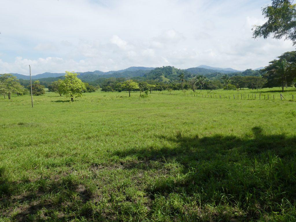 route nosara 1024x768 Costa Rica : A la découverte des animaux sauvages