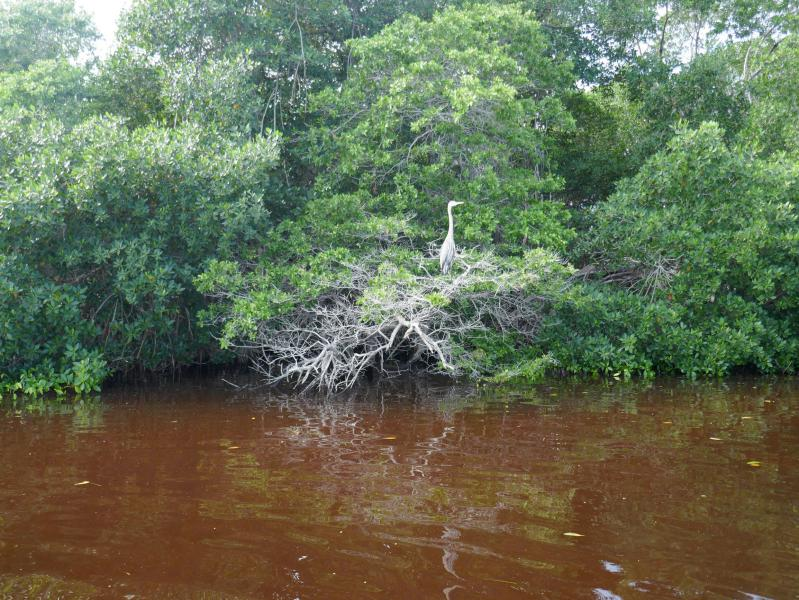 Photos yucatan rio lagartos bird Rio Lagartos, notre coup de coeur du Yucatan