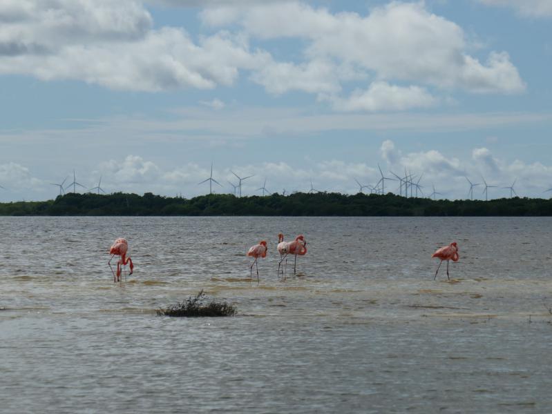 Photos yucatan rio lagartos flamands roses Rio Lagartos, notre coup de coeur du Yucatan