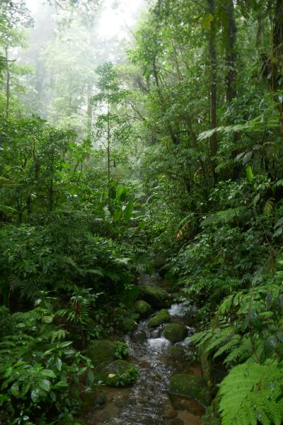 Santa Elena Reserve Un noël au Costa Rica