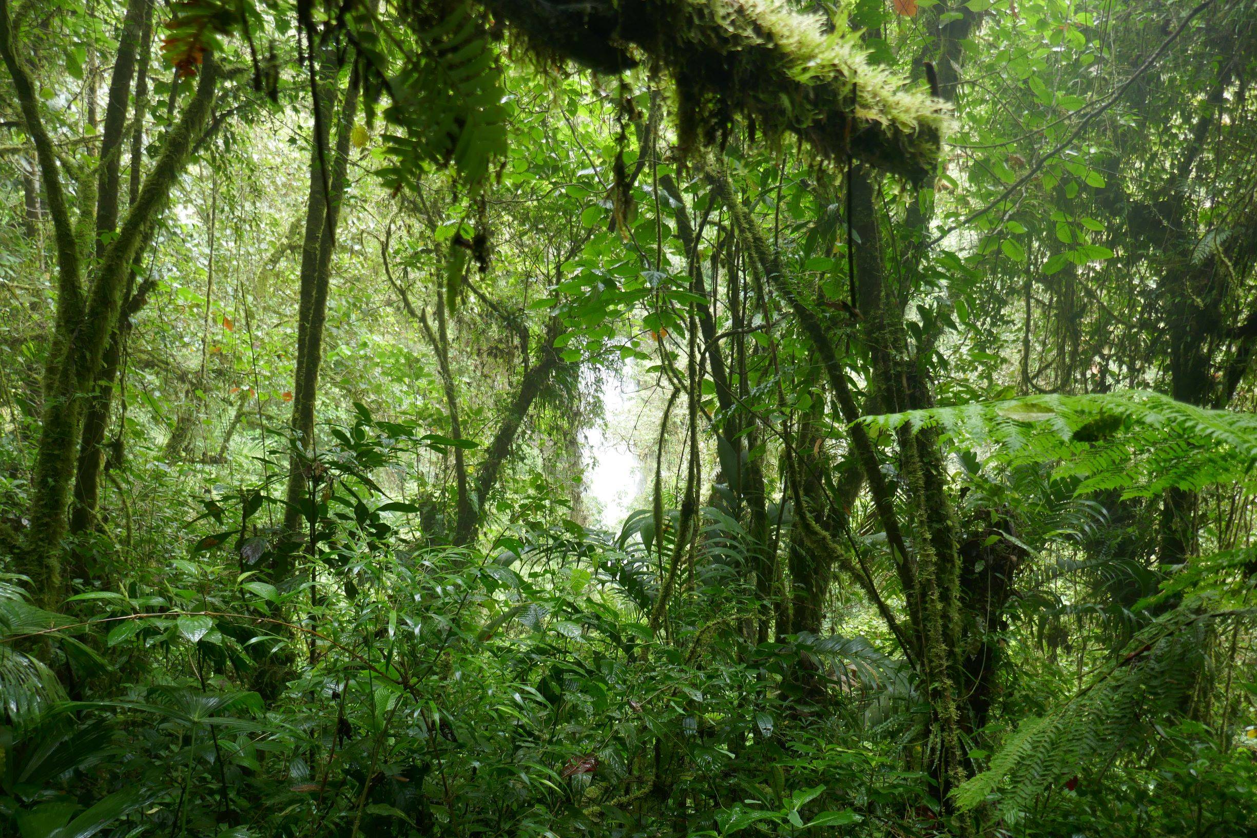 foret humide panama Le blog du voyage en famille