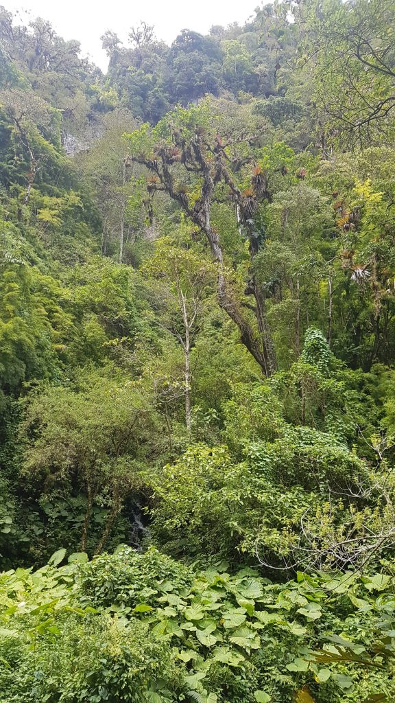 jungle panama 576x1024 A la découverte de la jungle du Panama