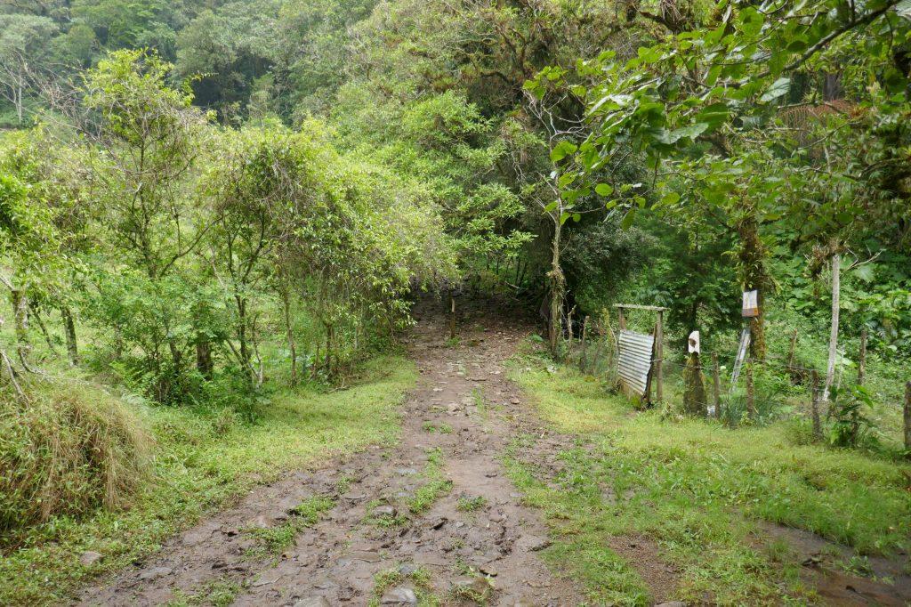 randonner boquete 1024x682 A la découverte de la jungle du Panama