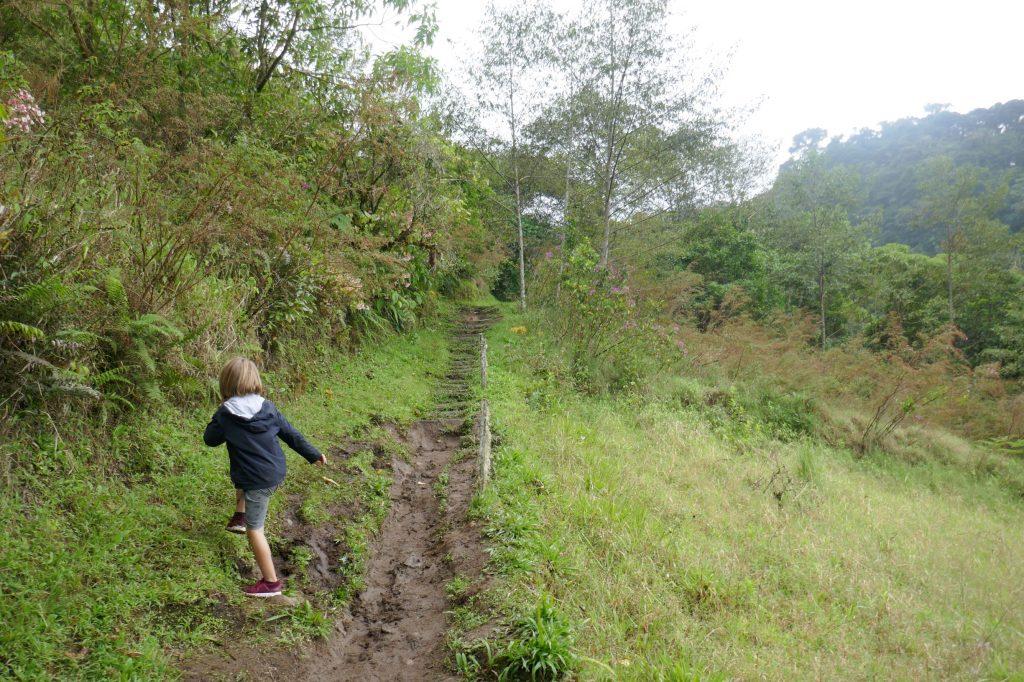 sentier boquete 1024x682 A la découverte de la jungle du Panama
