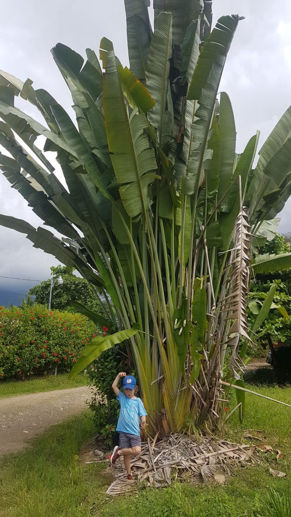 flore costa rica 576x1024 A la rencontre des baleines du Costa Rica