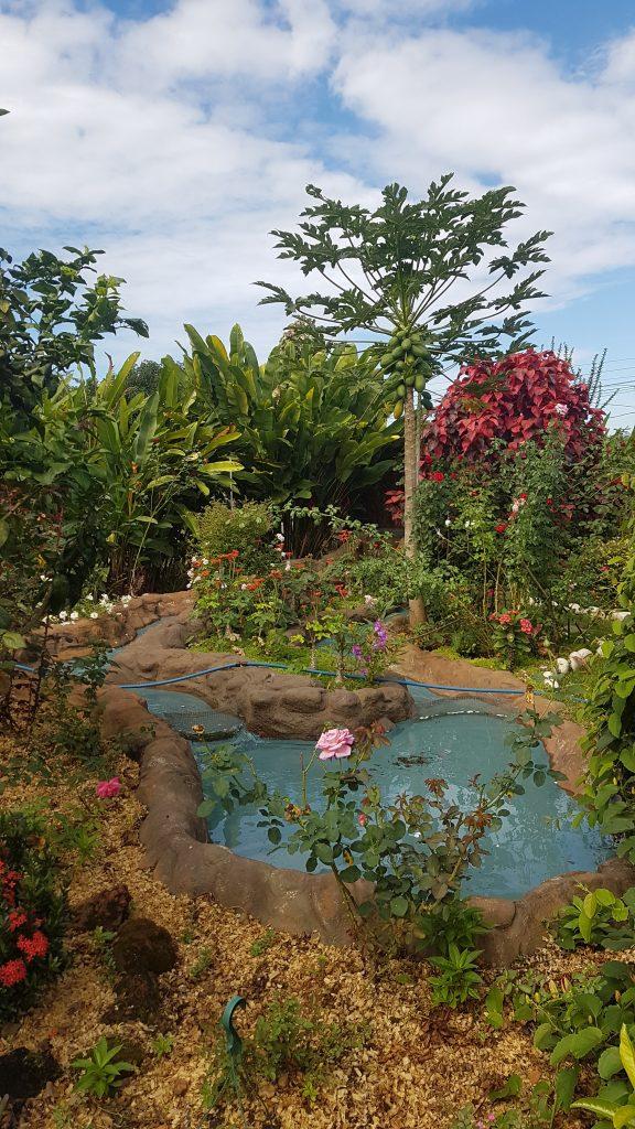 20200202 093202 576x1024 Finir en beauté dans la cordillère centrale du Costa Rica.