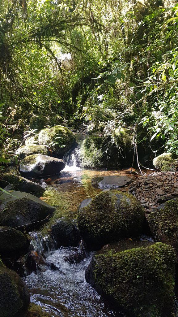 20200203 103247 576x1024 Finir en beauté dans la cordillère centrale du Costa Rica.