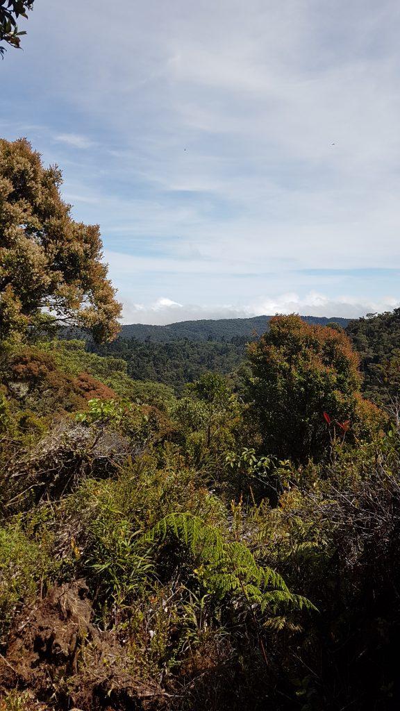 20200204 104424 576x1024 Finir en beauté dans la cordillère centrale du Costa Rica.